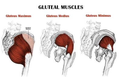 strengthen your glutes - anatomy